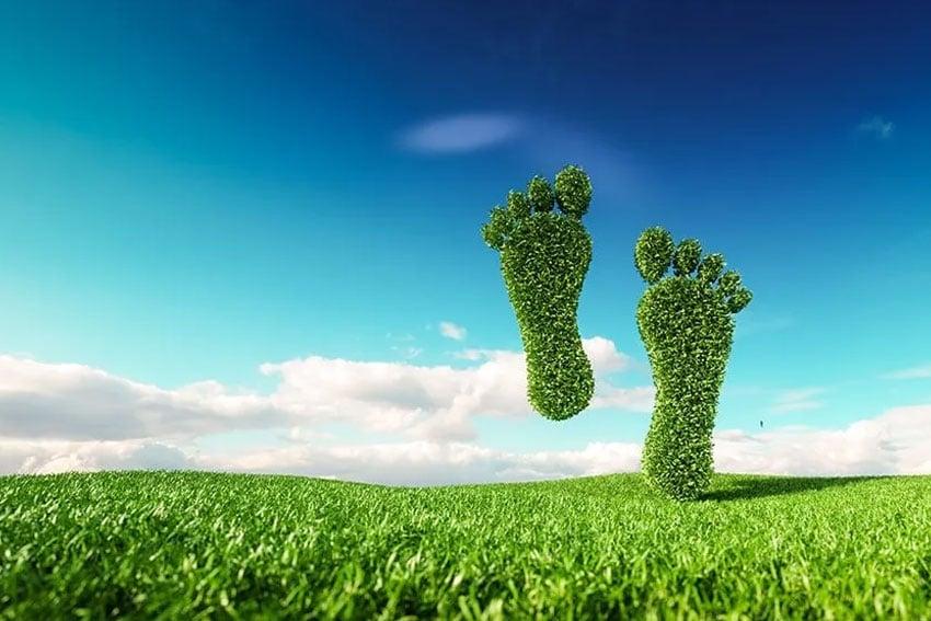 a set of footprints cut into large bushes